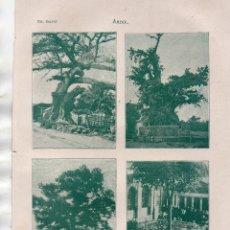 Coleccionismo: ANTIGUA LÁMINA SALVAT - ÁRBOL - EN EL QUE AMARRÓ COLÓN - DE GUERNICA - ÁRBOL DE LA PAZ ETC. Lote 176274067