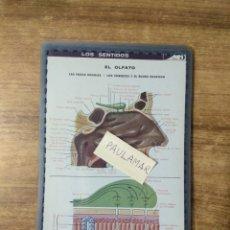 Coleccionismo: MFF.- LAMINA PLASTIFICADA DEL ORGANISMO HUMANO.- LOS SENTIDOS. EL OLFATO.. LAS FOSAS NASALES - . Lote 179952948