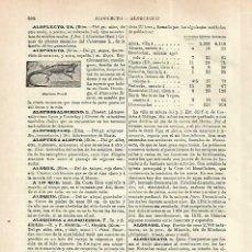 Coleccionismo: LAMINA ESPASA 33866: ALOPONOTUS RICORDI. Lote 180143830
