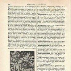 Coleccionismo: LAMINA ESPASA 33755: ALGARROBA. Lote 180146373