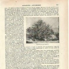 Coleccionismo: LAMINA ESPASA 33757: ALGARROBO. Lote 180146405