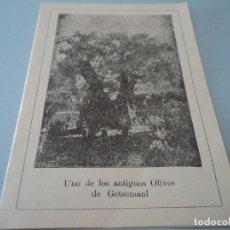 Coleccionismo: UNO DE LOS ANTIGUOS OLIVOS DE GETSEMANI DIPTICO FEBRERO1904. Lote 221865116