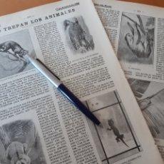 Coleccionismo: COMO TREPAN LOS ANIMALES / REYES JOVIALES / TELA DE ÁRBOL. 1906. Lote 194585927
