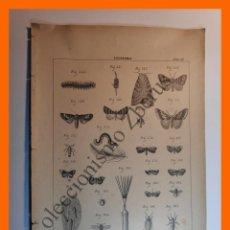 Coleccionismo: LÁMINA - ZOOTECNIA - EDITORES J. ROMÁ. Lote 195188241