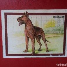 Coleccionismo: LÁMINA COLECCIÓN DE ANIMALES PERROS DE RAZA GRAN DANÉS 14 X 10 CM. Lote 199643305