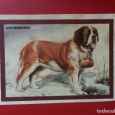 Coleccionismo: LÁMINA COLECCIÓN ANIMALES PERROS DE RAZA SAN BERNARDO 14 X 10 CM. Lote 199653788