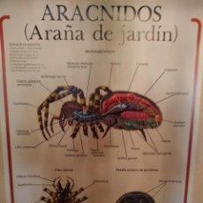 Coleccionismo: LAMINAS DE ANATOMÍA ANIMAL: INVERTEBRADOS. ED. JOVER. COMPLETA. Lote 202776522
