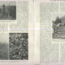 Coleccionismo: LAS ISLAS DE LAS ESPECIAS. Lote 218781700