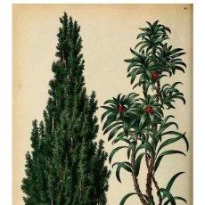 Coleccionismo: REPRODUCCIÓN/REPRODUCTION 8969289024: NEERLAND'S PLANTENTUIN :. GRONINGEN :J. WOLTERS,1865-1867.. Lote 235476015
