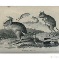 Coleccionismo: REPRODUCCIÓN/REPRODUCTION 8950797402: GENERAL ZOOLOGY, OR SYSTEMATIC NATURAL HISTORY,. LONDON,PR.... Lote 235476050