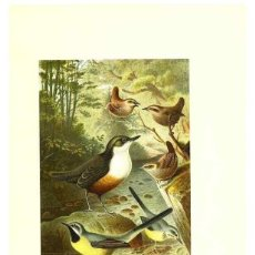 Coleccionismo: REPRODUCCIÓN/REPRODUCTION 8970003788: OUR LIVING WORLD;. NEW YORK :S. HESS,[1885]. Lote 235476110