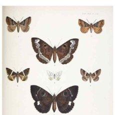 Coleccionismo: REPRODUCCIÓN/REPRODUCTION 9006390582: ILLUSTRATIONS OF TYPICAL SPECIMENS OF LEPIDOPTERA HETEROCE.... Lote 235476150