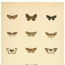 Coleccionismo: REPRODUCCIÓN/REPRODUCTION 8726510616: ILLUSTRATIONS OF TYPICAL SPECIMENS OF LEPIDOPTERA HETEROCE.... Lote 235476200