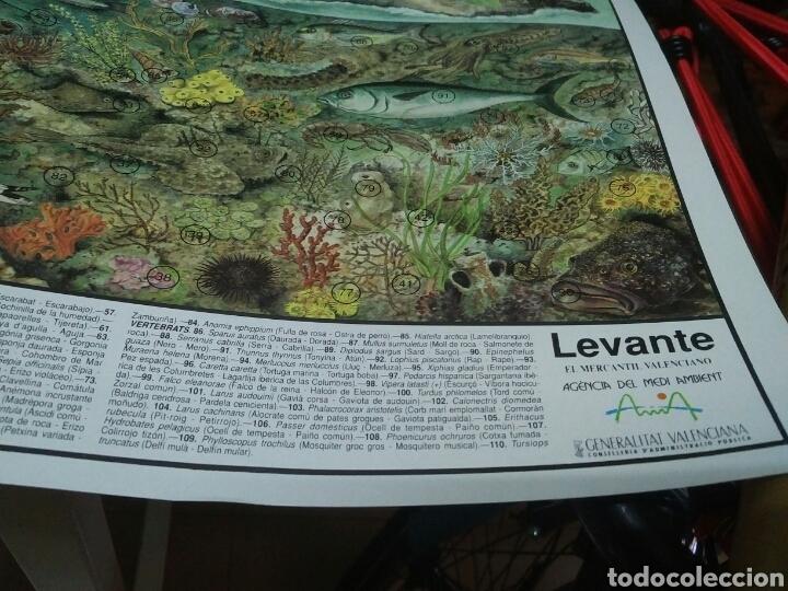 Coleccionismo: 12 láminas coleccionables flora y fauna Comunidad Valenciana - Foto 3 - 243606615