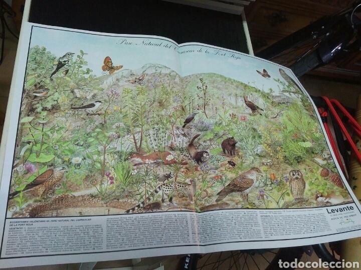 Coleccionismo: 12 láminas coleccionables flora y fauna Comunidad Valenciana - Foto 4 - 243606615