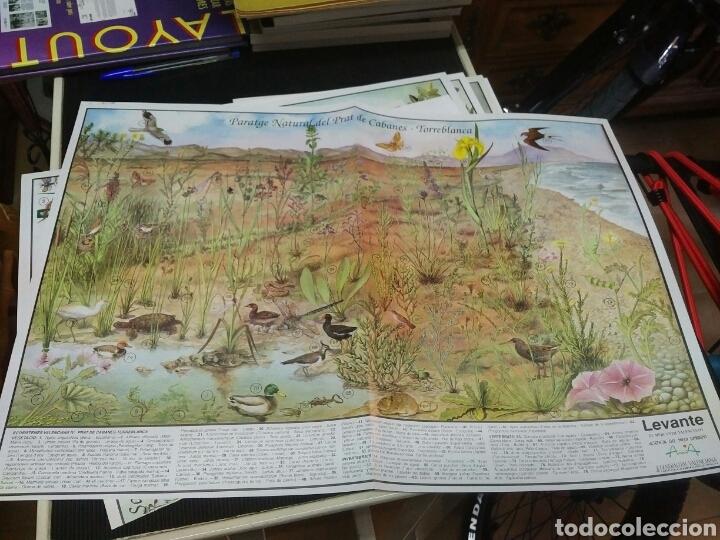 Coleccionismo: 12 láminas coleccionables flora y fauna Comunidad Valenciana - Foto 6 - 243606615