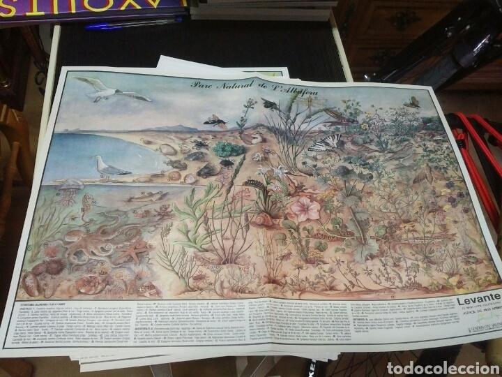 Coleccionismo: 12 láminas coleccionables flora y fauna Comunidad Valenciana - Foto 7 - 243606615