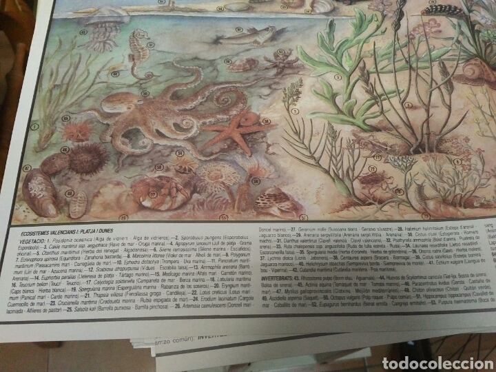 Coleccionismo: 12 láminas coleccionables flora y fauna Comunidad Valenciana - Foto 8 - 243606615