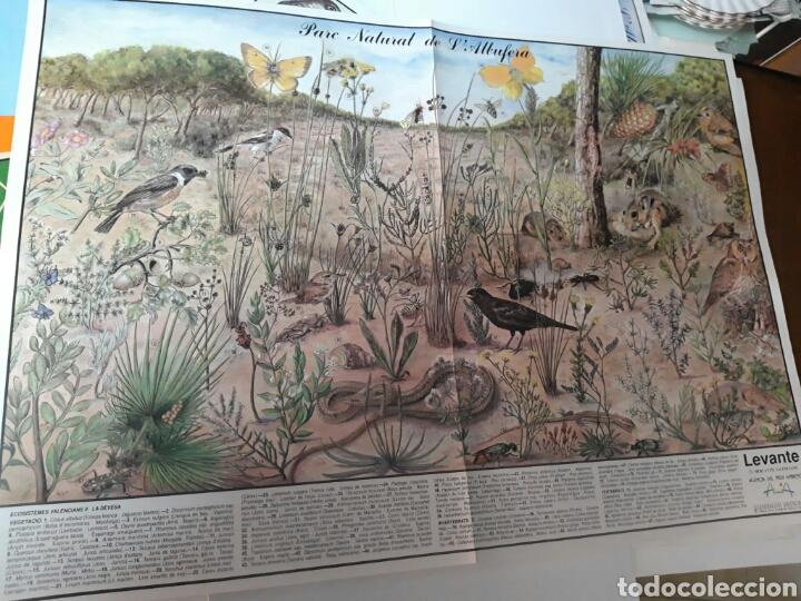 Coleccionismo: 12 láminas coleccionables flora y fauna Comunidad Valenciana - Foto 9 - 243606615