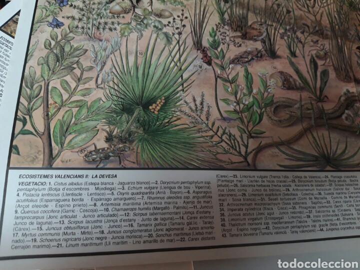 Coleccionismo: 12 láminas coleccionables flora y fauna Comunidad Valenciana - Foto 10 - 243606615