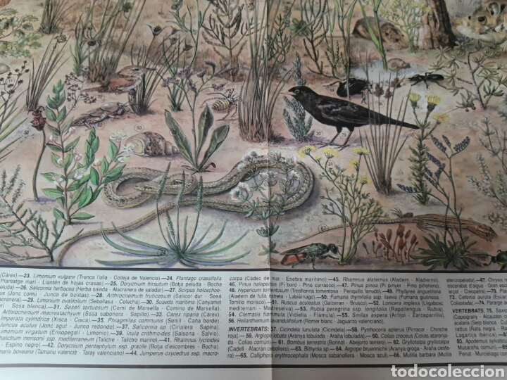 Coleccionismo: 12 láminas coleccionables flora y fauna Comunidad Valenciana - Foto 11 - 243606615