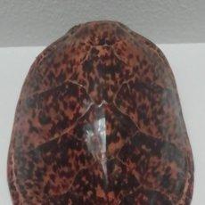 Colecionismo: CAPARAZÓN DE TORTUGA GIGANTE DE GALÁPAGOS (ECUADOR). Lote 295419178