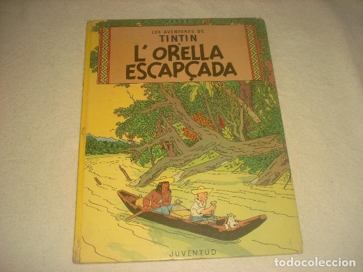 LES AVENTURES DE TINTIN. L ORELLA ESCAPÇADA . EN CATALA. PRIMERA EDICIO 1965 (Tebeos y Comics - Juventud - Tintín)