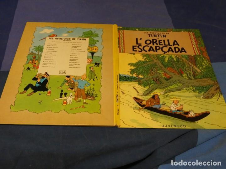 TINTIN LA ORELLA ESCAPÇADA CUARTA EDICION 1979 BUEN ESTADO CATALAN (Tebeos y Comics - Juventud - Tintín)