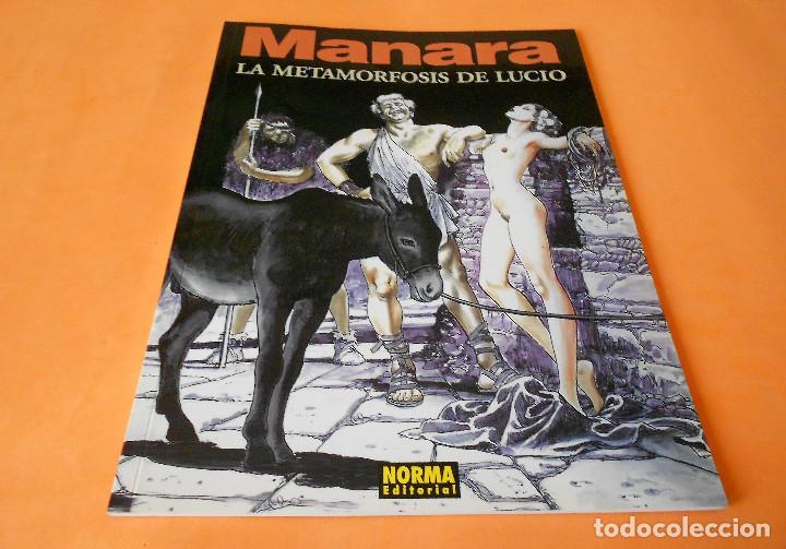 MANARA COLECCION COLOR Nº 14 - LA METAMORFOSIS DE LUCIO - NORMA . 2000. RÚSTICA. BUEN ESTADO. (Tebeos y Comics - Norma - Comic Europeo)