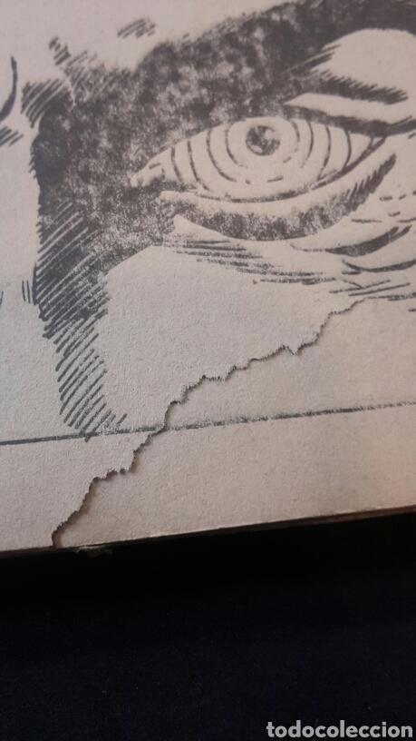 Cómics: Patrulla X n°22. Vertice 1974 - Foto 5 - 117299376