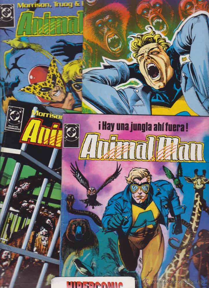 ANIMAL MAN NUMEROS LOTE 15 EJEMPLARES 1,2,3,4,5,6,7,8,9,10,11,12,13, 16 Y 24 EDICIONES ZINCO (Tebeos y Comics - Zinco - Otros)