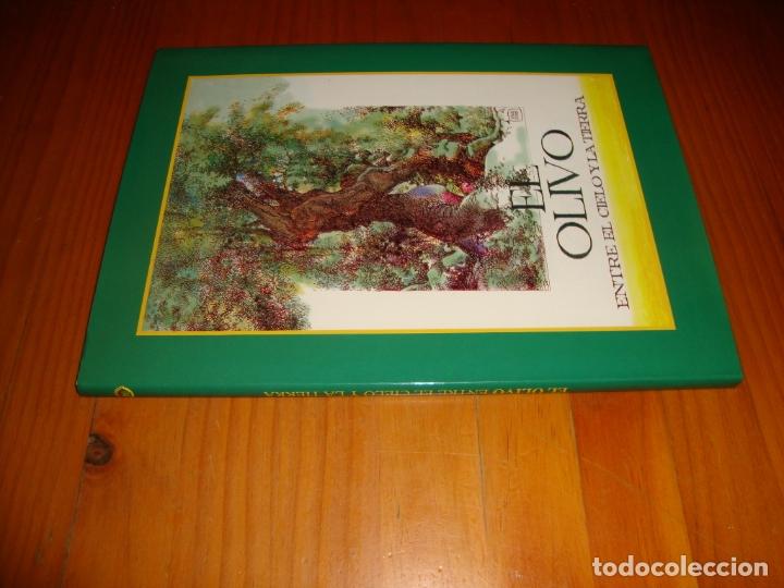Cómics: EL OLIVO. ENTRE EL CIELO Y LA TIERRA - A. HERNÁNDEZ PALACIOS (ILUST.) - MUY BUEN ESTADO - Foto 2 - 183041253
