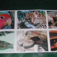 Coleccionismo Cromos antiguos: HOJA 6 CROMOS ANIMALES: 29, 36, 48, 50, 51, 90. Lote 10101166