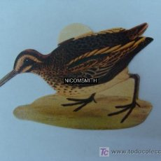 Coleccionismo Cromos antiguos: CROMO DE PAJAROS PANRICO - AGACHADIZA CHICA. Lote 15551721