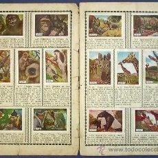 Coleccionismo Cromos antiguos: LOTE DE CROMOS. CROMOS SUELTOS; 1,00 €. FIERAS. SUPLEMENTO DEL ÁLBUM LAS MINAS DEL REY SALOMÓN. 1952. Lote 36041721