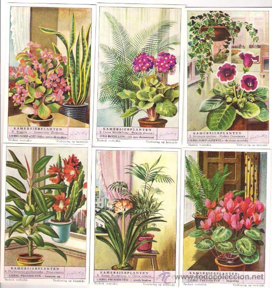 Liebig serie completa n 1574 plantas ornamenta comprar - Plantas ornamentales de interior ...