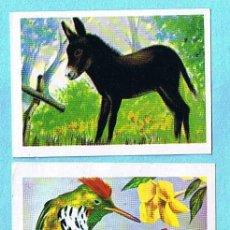 Coleccionismo Cromos antiguos: LOTE DE CROMOS. CROMOS SUELTOS; 0,60 €. MUNDO ANIMAL. EDITORIAL FHER, 1967.. Lote 31319370