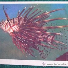 Coleccionismo Cromos antiguos: CROMOS-V8-NATURALEZA VIVA-EDICIONES ESTE-DESPEGADOS-Nº114. Lote 35596146