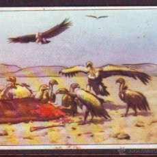 Coleccionismo Cromos antiguos: CROMO CHOCOLATES BATANGA.ALBUM NR.1.SERIE VI.CROMO NR.5.. Lote 39960511