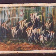Coleccionismo Cromos antiguos: CROMO Nº 7,SERIE 18,PRIMER ALBUM GALLINA BLANCA,AÑOS 1940.FAUNA SUBMARINA.. Lote 39960882