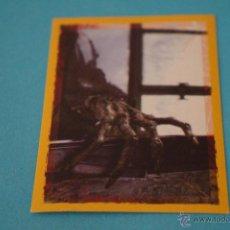 Coleccionismo Cromos antiguos: CROMO DE:HARRY POTTER Y EL CALIZ DE FUEGO,(SIN PEGAR),Nº16,DEL ALBUM,HARRY POTTER Y EL..,DE PANINI. Lote 191534508