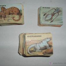 Coleccionismo Cromos antiguos: CROMOS DEL ALBUM DEL REINO ANIMAL COSTA COLECCION COMPLETA SIN ALBUM. Lote 51820121