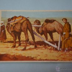 Coleccionismo Cromos antiguos: CROMO DE:HOMBRES,RAZAS Y COSTUMBRES,(SIN PEGAR),Nº144,AÑO 1972,DEL ALBUM,HOMBRES,RAZAS Y COSTUMBRES. Lote 210350738