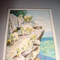 Coleccionismo Cromos antiguos: CROMO SIN PEGAR Nº 24 - WEST - PANINI 1993. Lote 54449550