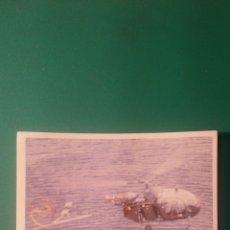 Coleccionismo Cromos antiguos: CROMO PANINI ? AVIONES N°145. Lote 58219790