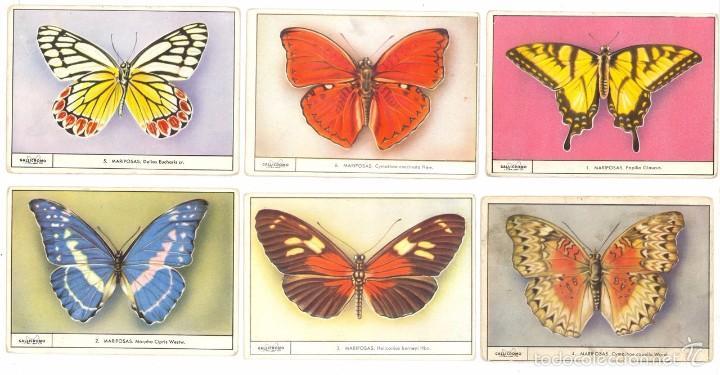 LOTE: 6 CROMOS, GALLICROMOS GALLICROMO SERIE Nº3 COMPLETA MARIPOSA, MAIZCREM GALLINA BLANCA, AÑOS 50 (Coleccionismo - Cromos y Álbumes - Cromos Antiguos)