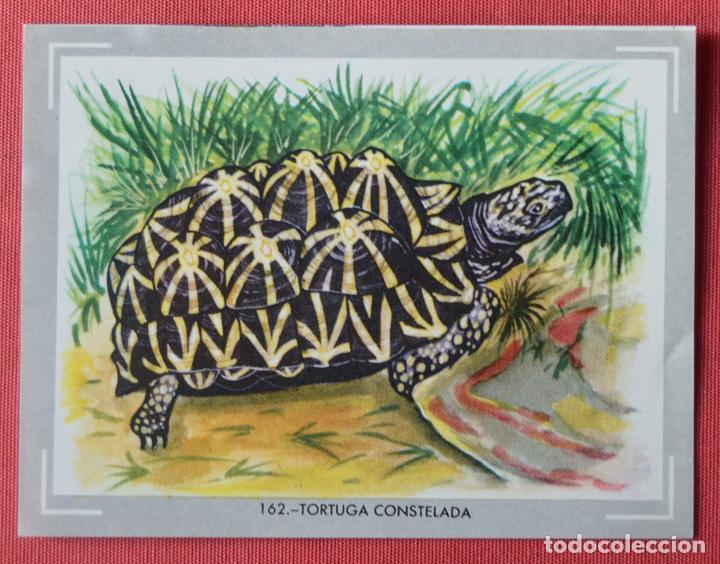 cromo 162 - álbum vida y color - 1965 - tortuga - Comprar Cromos ...