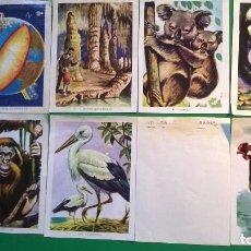 Collectionnisme Cartes à collectionner anciennes: ALBUM CIENCIA Y ARTE - EDT. FHER 1967 - CROMOS DESPEGADOS (L -101). Lote 214283871