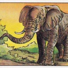Coleccionismo Cromos antiguos: CROMO LOS RECORDS (ROS). Nº 25. EL ANIMAL TERRESTRE MAS GRANDE. ELEFANTE AFRICANO. Lote 68527221