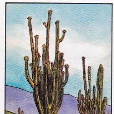 Coleccionismo Cromos antiguos: CROMO LOS RECORDS (ROS). Nº 47. EL CACTUS MAS GRANDE. SAGUARO. Lote 68559913